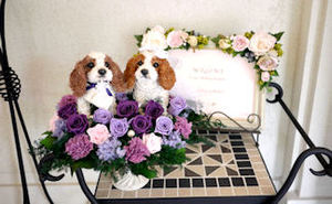 Weddingdog_bana
